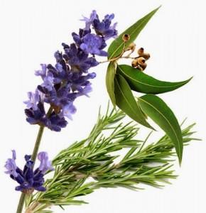 lavender-eucalyptus