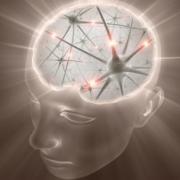 3843-Brain-21